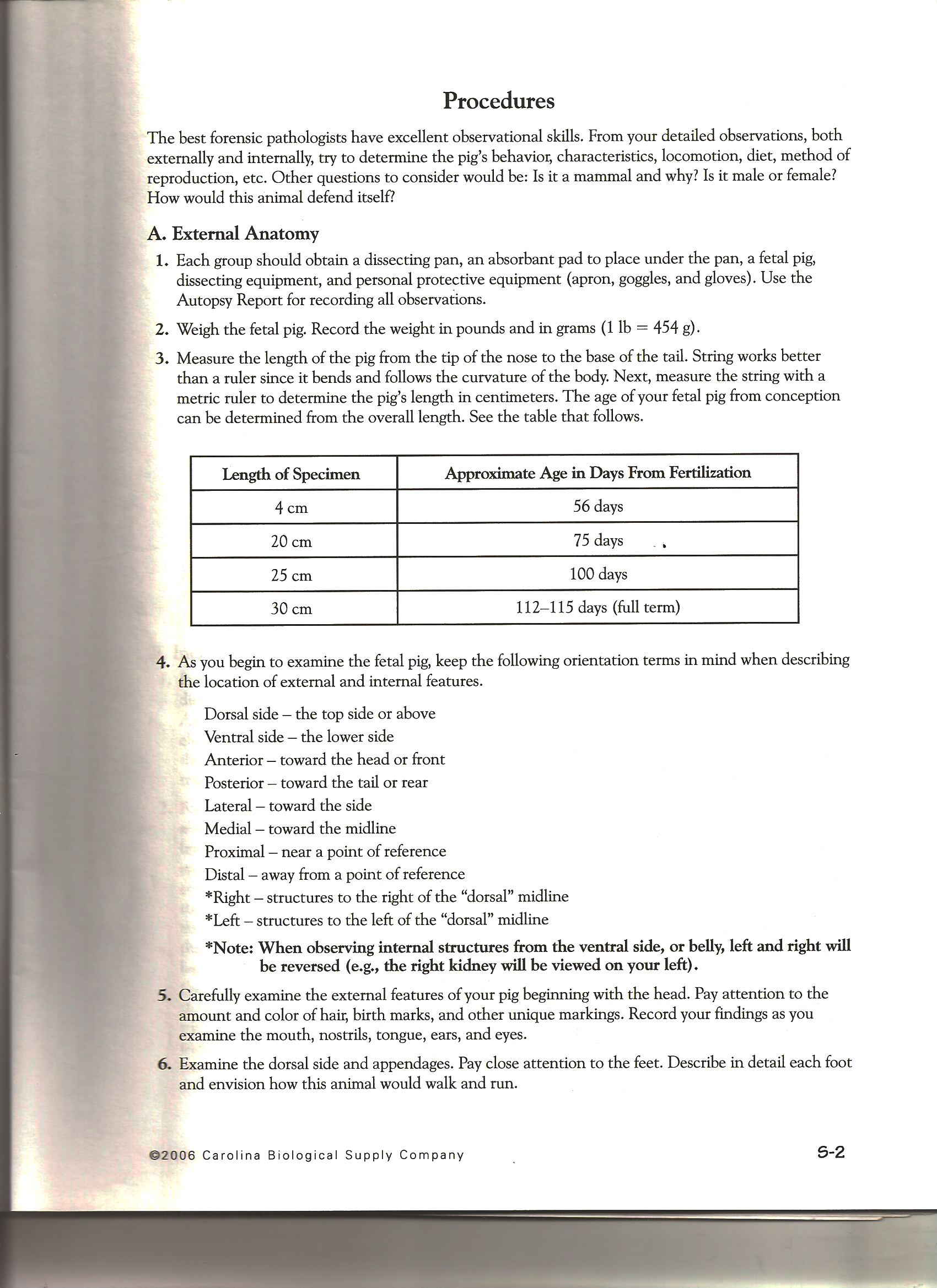 Crayfish dissection worksheet key