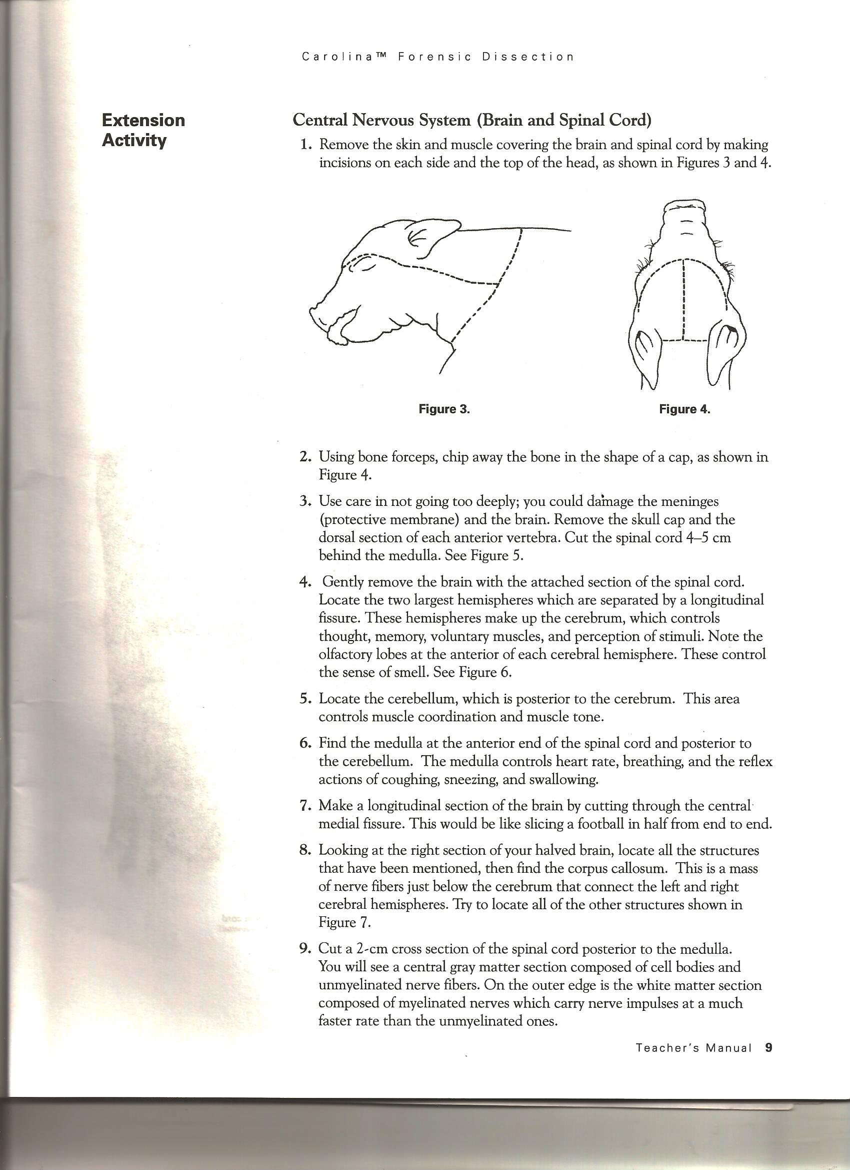 Pig Dissection Procedure 2