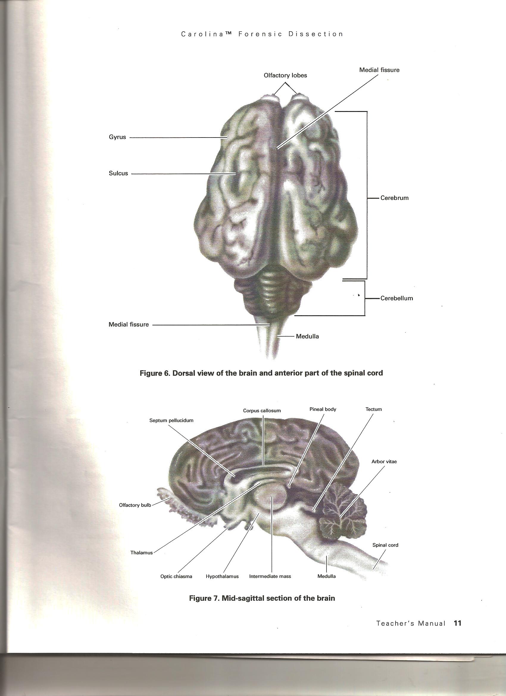 Kennedy, Anne / Biology Course