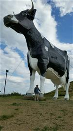 Ms Endriss with Salem Sue, the World's Largest Holstein Cow, in New Salem, North Dakota