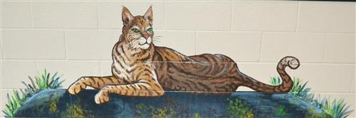 Wildcat Wall Painting
