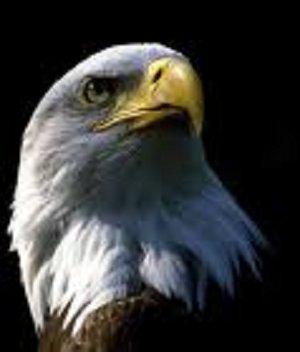 KPES Eagle