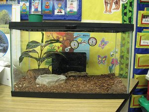 Noell elizabeth f our class pet Sedge garden elementary school